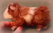 Needle felted guinea pig (1)