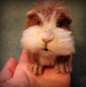 Needle felted guinea pig
