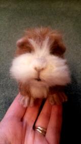 Needle felted guinea pig (9)