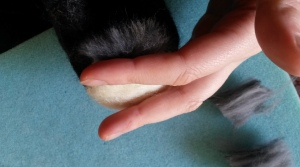 How to needle felt long animal fur (3)