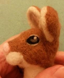 10-mouse eye15