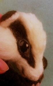 13-badger eye (19)