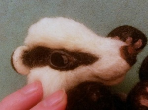 16-badger eye (2)