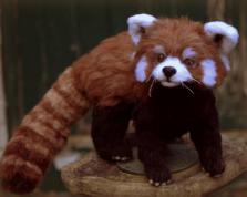 Needle felted red panda (6)