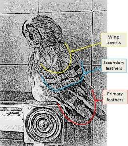 1-anatomy