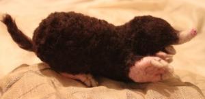 13-Needle felted mole (16)