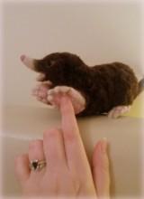 25-Needle felted mole (3)