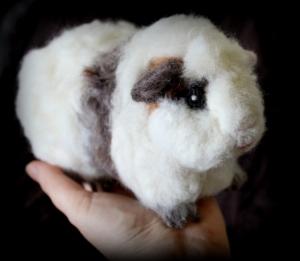 Guinea pig (11)