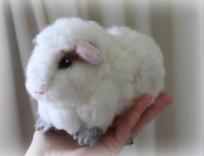 Guinea pig (13)