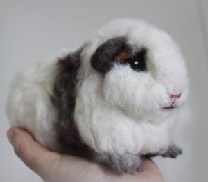 Guinea pig (17)