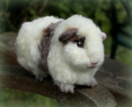 Guinea pig (25)