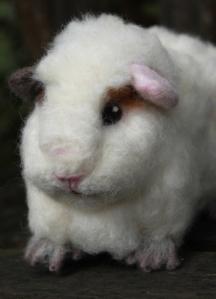 Guinea pig (26)