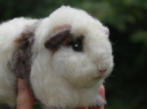 Guinea pig (27)