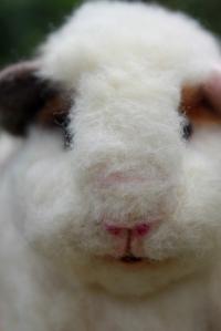 Guinea pig (28)
