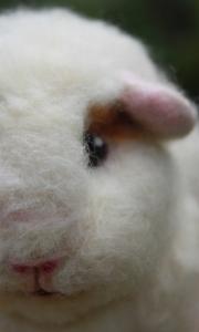 Guinea pig (29)