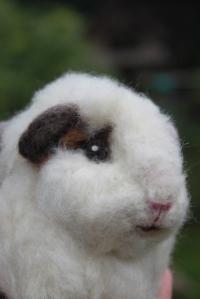 Guinea pig (36)