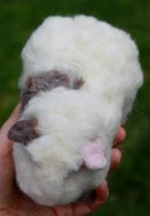 Guinea pig (37)