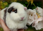 Little by little  (a custom needle felted guinea pig)