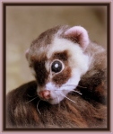 46-Ferret (119)
