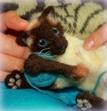 Needle_felted_cat.JPG