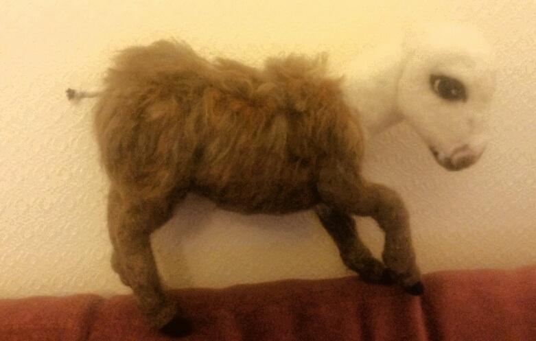 Miniature donkey (4/6)