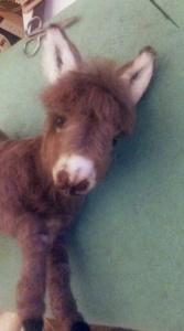 Needle felted donkey 11