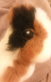 Needle felted WIP guineapig (18)