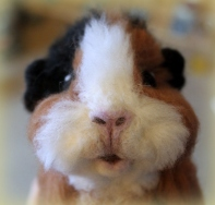 Needlefelted guinea pig (6)