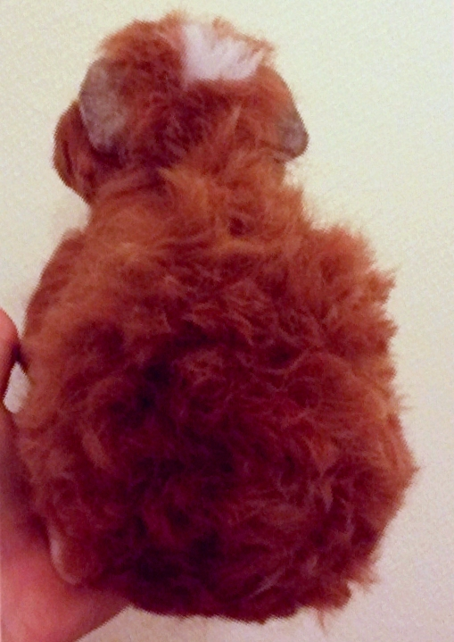 8-Needle felted guinea pig (10)