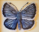 Needle felted butterfly – bringing back the extinct (and hope) with the art of needle felting
