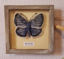 Felted butterfly (9)