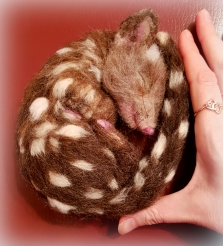 05-Needle felted quoll (20)