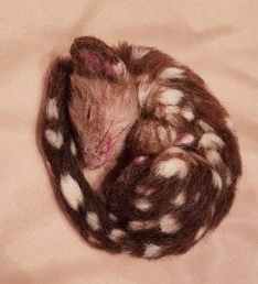 07-Needle felted quoll (27)
